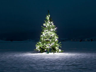 what-does-the-christmas-tree-symbolize_55973660-b7b6-47df-bb7c-30799bd71554